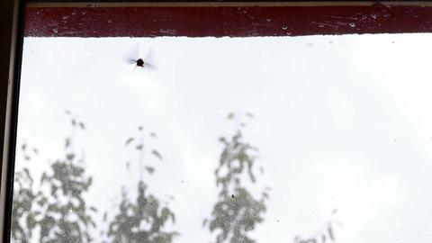 Chasing Freedom Moth Footage