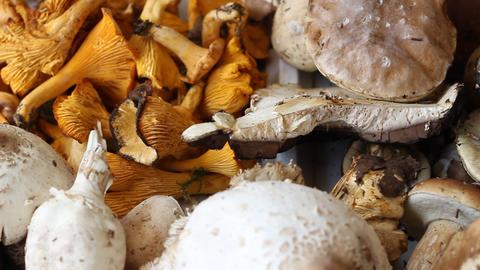 Edible Mushrooms Footage