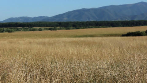 Dry Grass Wild Lands stock footage
