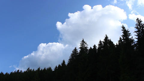 Fluffy White Clouds Out of Forest Footage