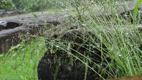 Herbs Waterdrops Footage
