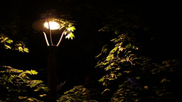 Insects Around Street Lamp Live Action