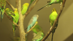 Lots Of Parrots stock footage