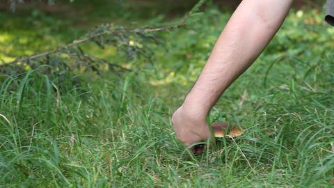 Picking Porcino Mushroom Footage