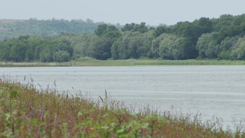 Plain River Shore with Herbage Footage