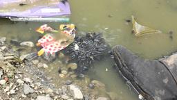 Pollution Creatures, Live Action