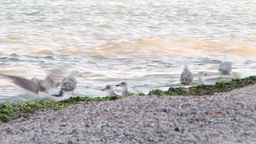 Seagulls on the beach Footage