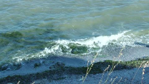 Seaweed on Shore Footage