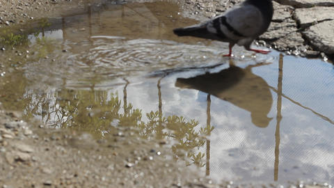 Sky Reflection on Puddle Footage
