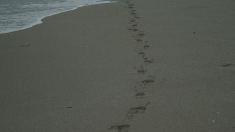 Walk On The Beach 2