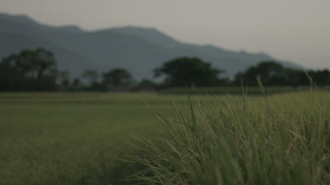Country Road Ricefield 1