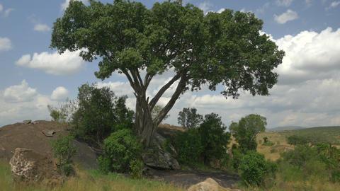 AERIAL: African Savannah
