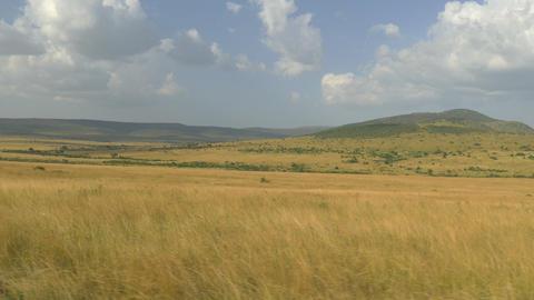AERIAL: Amazing Kenyan safari, Maasai Mara Footage