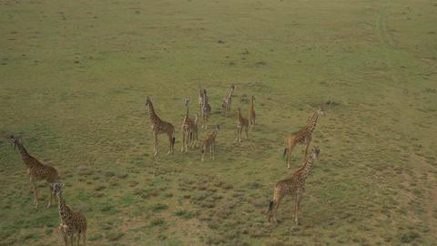 AERIAL: African Animals