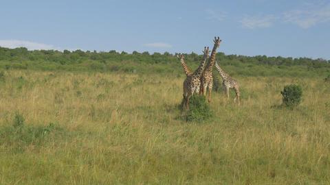 AERIAL: African Animals 0