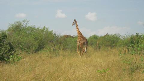 AERIAL: African Animals 1