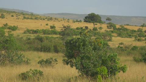 AERIAL: African Animals 2