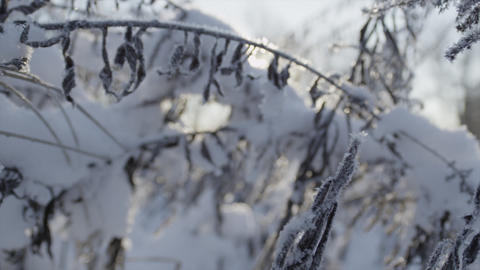 CLOSE UP: Frozen nature in winter Footage