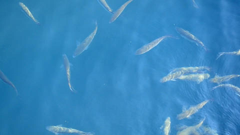 Fish In The Sea stock footage