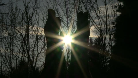 Hands catching the sun Footage