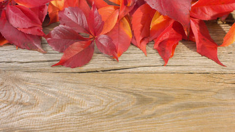 Autumn leaves on wood background Live Action