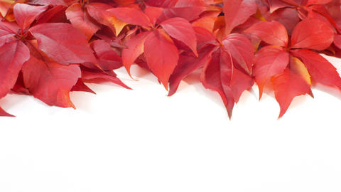 Autumn leaves background, copy space Footage