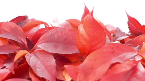 Autumn Leaves Background stock footage