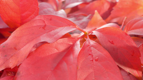 Autumn falls leaves nature backgrounds Footage