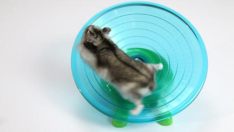 Hamster And Wheel stock footage