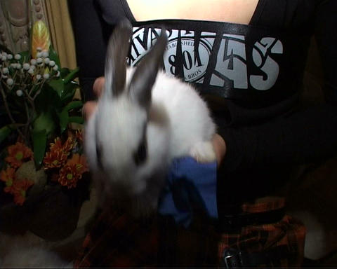 girl with rabbit Stock Video Footage