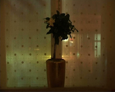 flower on the window Stock Video Footage