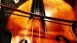 Musician And Double Bass 20 Playing Wide Low Angle stock footage