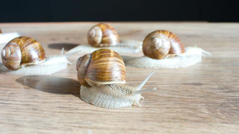 Walking snails, slugs Footage