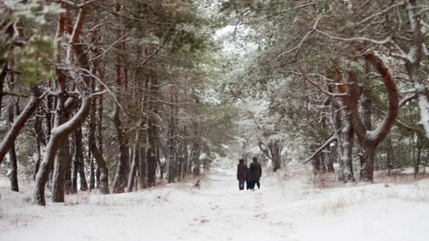 1699 Family walking through snowy woods Footage