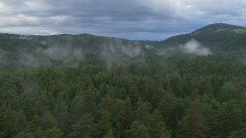 AERIAL: Misty pine forest Footage
