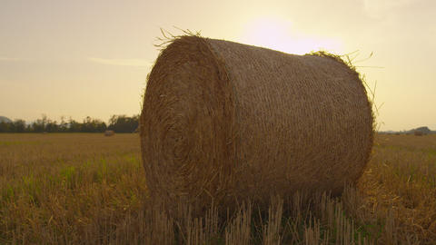 Bale of hay on a farmland at sunset Footage