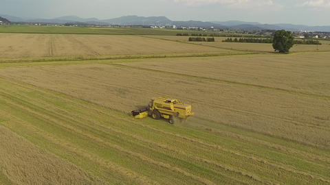 AERIAL: Combine harvester working on a wheat field Footage