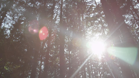 SLOW MOTION: Sun shining through trees deep in the Footage