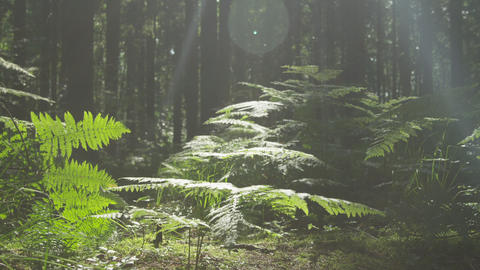 SLOW MOTION: Trees, roots and moss in the sunny wo Footage