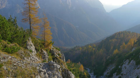 AERIAL: autumn pine trees above the mountain cliff Footage