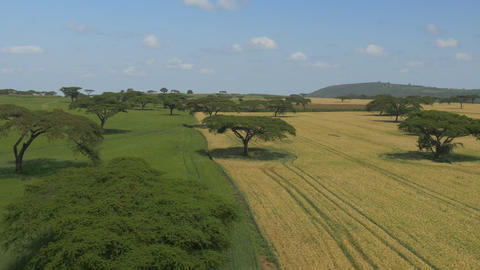 AERIAL: Vast wheat fields in Africa Footage