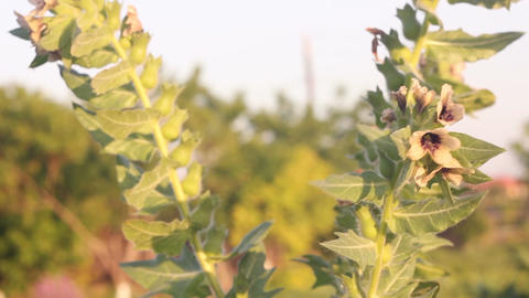 A beautiful flower Stock Video Footage