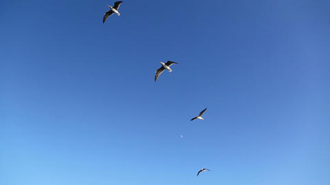 group of seagull flying in the blue sky Footage