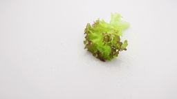 green lettuce falling in slow motion Footage