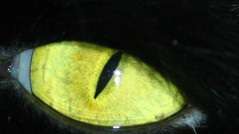 Black Cat's Eye Footage
