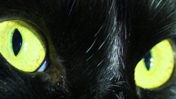 Black Cat's Eyes Stock Video Footage