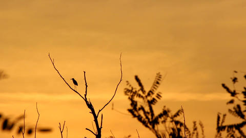 Sunset And Silhouette Of The Bird stock footage