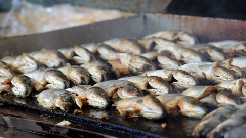 Fish,Fish On The Grill stock footage