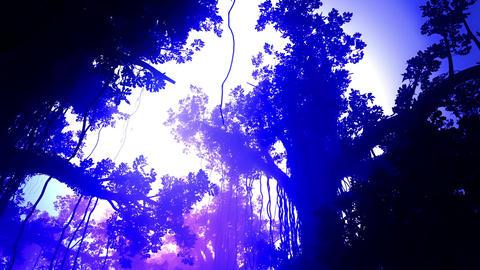 4 K Mysterious Deep Jungle in the Sunset Sunrise 3 Archivo