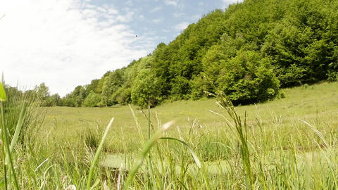 wind tickles high green grass in summer afternoon  Footage